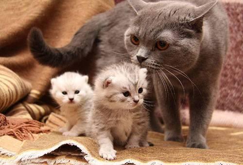 Ушные капли Барс для кошек - инструкция по применению
