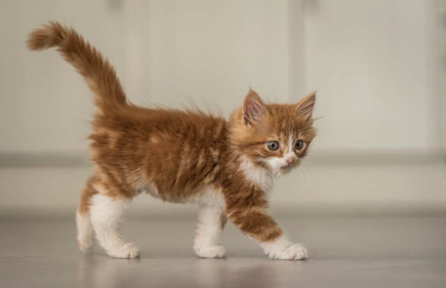 У котенка большой живот - причины, симптомы, лечение