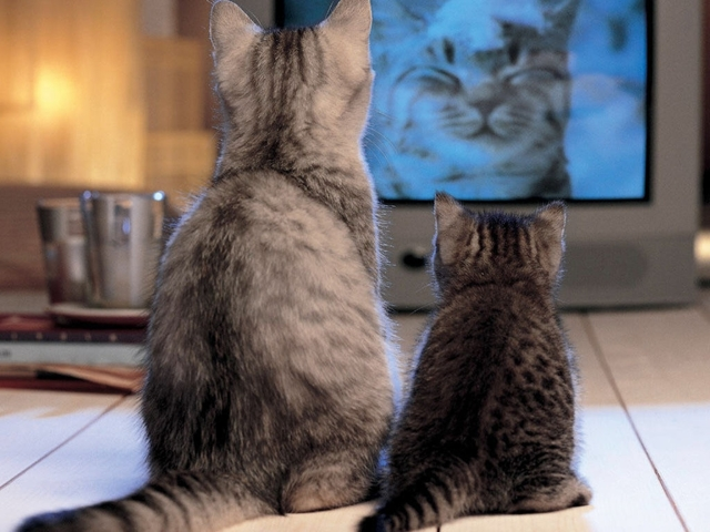 Какие цвета видят кошки - какие различают