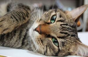 Корм Пронатюр для кошек - описание, состав, виды, отзывы