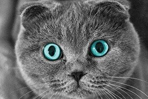 Амоксициллин для кошек - инструкция по применению препарата