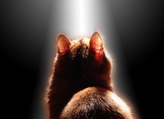 Кошки видят потусторонний мир - правда ли это