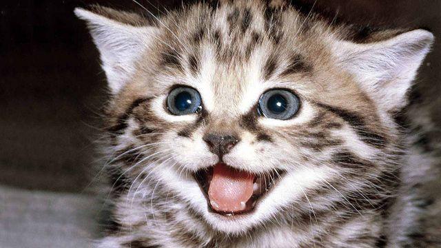 5 причин почему котенок мяукает когда ходит в туалет