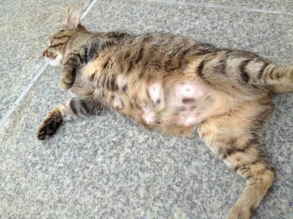Через сколько должна родить кошка после отхода вод?