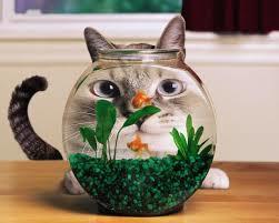Смешанное питание для кошек - как правильно кормить кота?