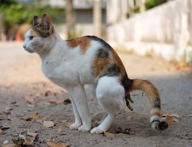 Сколько кошка может не ходить в туалет