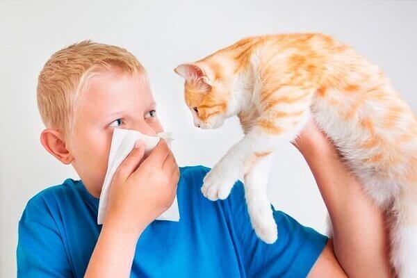 7 симптомов аллергии на кошек - признаки и лечение