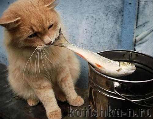 Сало кошкам: можно или нет