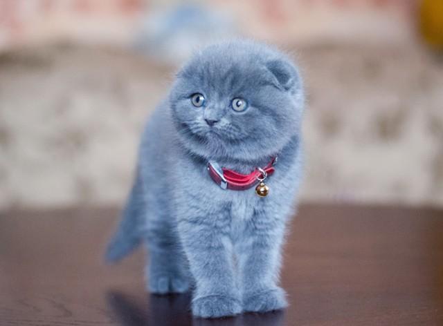Почему котенок не какает 3 дня
