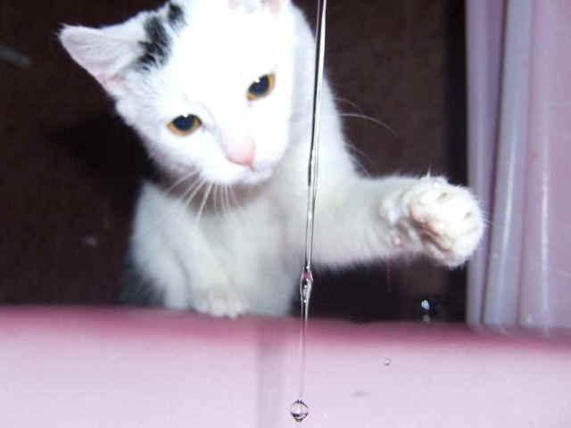 Котенок не пьет воду - как научить пить