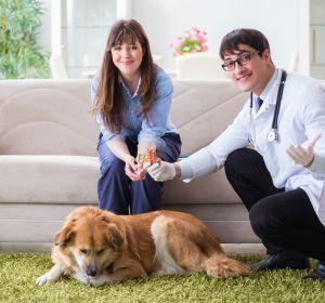 Немозол для кошек: инструкция по применению, дозировка
