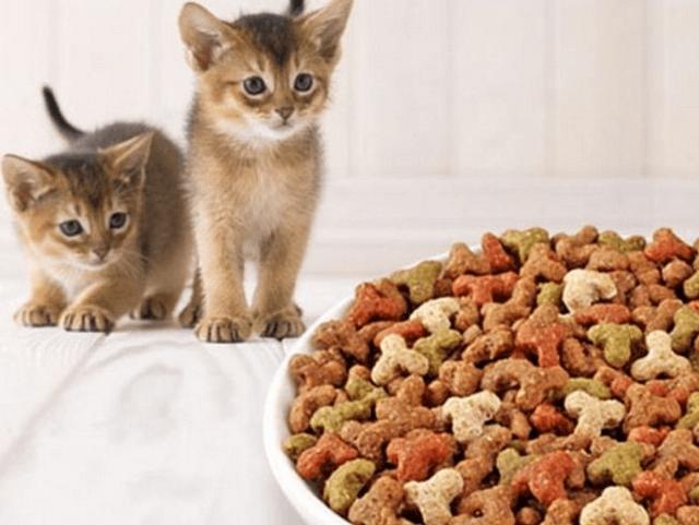 Фортифлора для кошек - инструкция по применению препарата