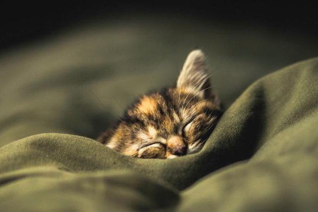 Кот ночью не дает спать - что делать