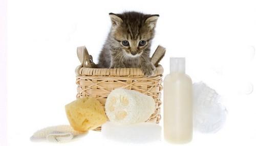 Чем лучше обработать кошек от блох