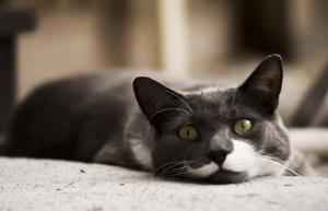 Капли Стоп-стресс для кошек - инструкция по применению