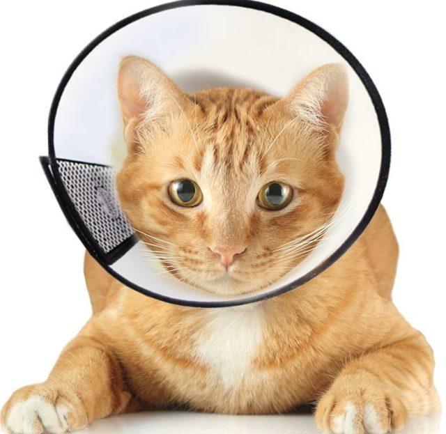 Кот не ест после кастрации - причины и уход