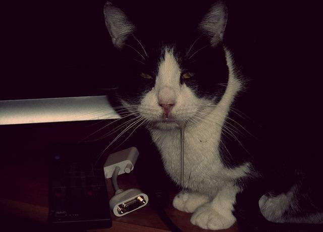 Стоматит у кошек - симптомы, причины и лечение