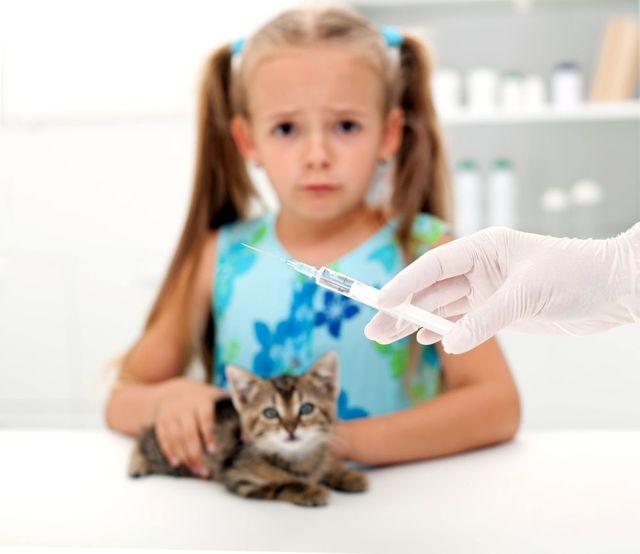 В каком возрасте делают прививки котятам?