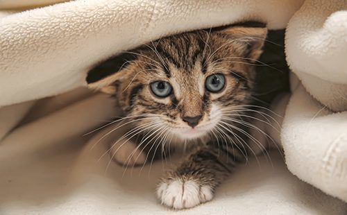 Как отучить кошку писать в неположенном месте - способы отучения