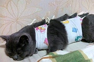 Когда можно стерилизовать кошку после родов, если она кормит