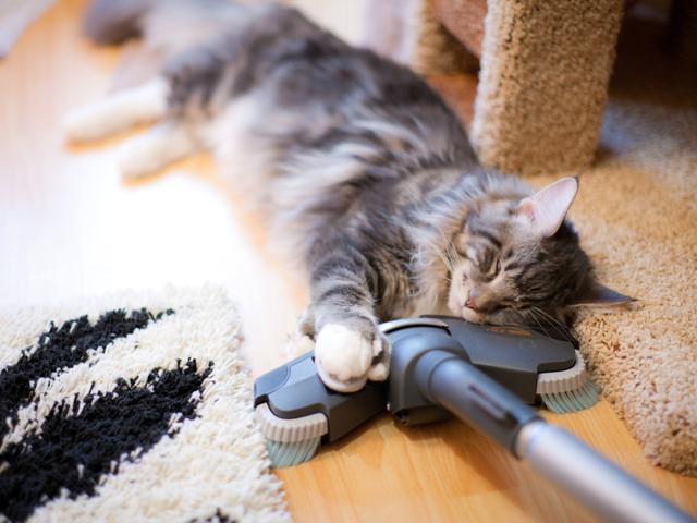 Почему кошки боятся пылесоса - причины и что делать