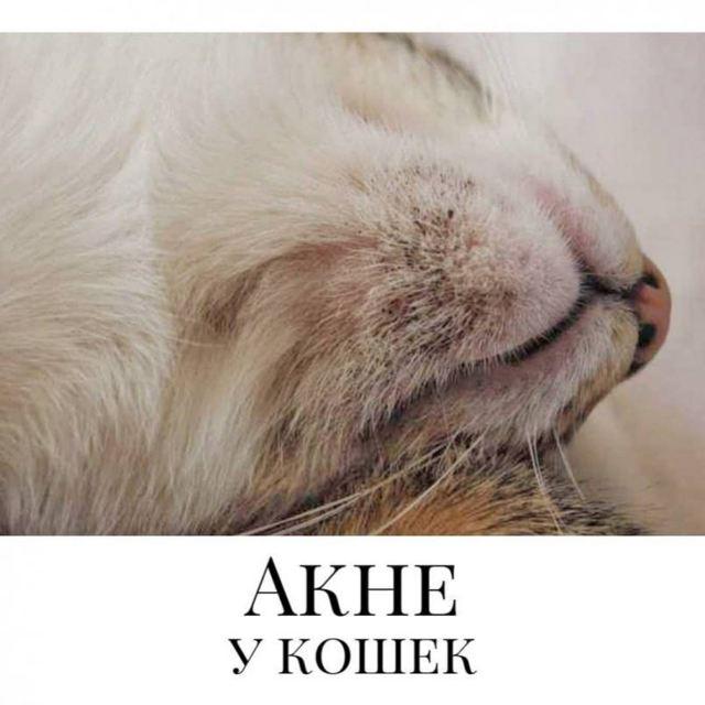 Черные точки на подбородке у кошки - признаки, лечение, профилактика