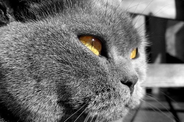 Лечение кошек водкой - заболевание которые можно лечить