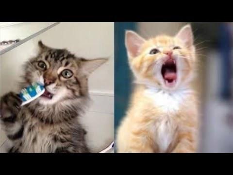 4 причин почему у кота желтые зубы - как бороться с проблемой