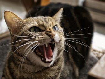 Кошка шипит на ребенка - причины и что делать