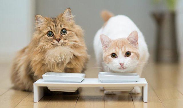 Мороженое кошкам - можно ли давать