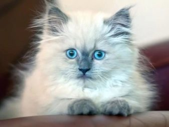 Простые имена для котов и кошек