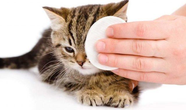 7 причин почему у кошки текут глаза - симптомы, лечение