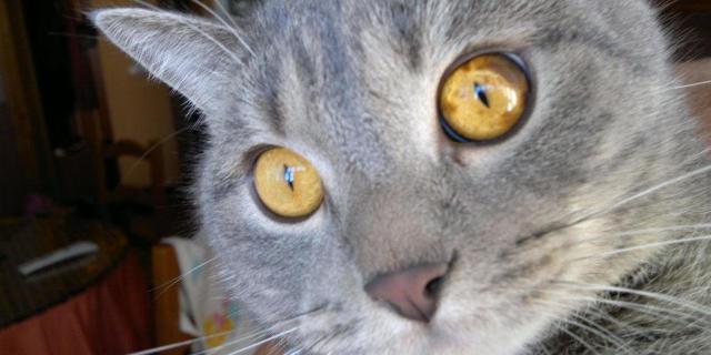 Болячка на носу у кота и кошки