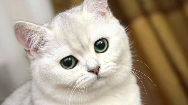 Как назвать кота - 80 имен и кличек