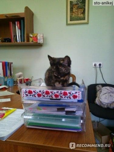 Флуконазол для кошки: инструкция по применению