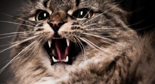 ТОП 5 болезней лап у кошек