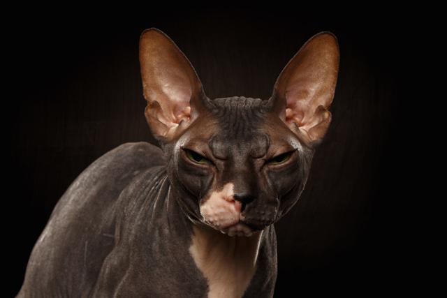 Корм Саммит для кошек - описание, состав, отзывы ветеренаров