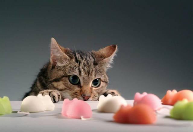 Когда у кошки выпадают молочные зубы