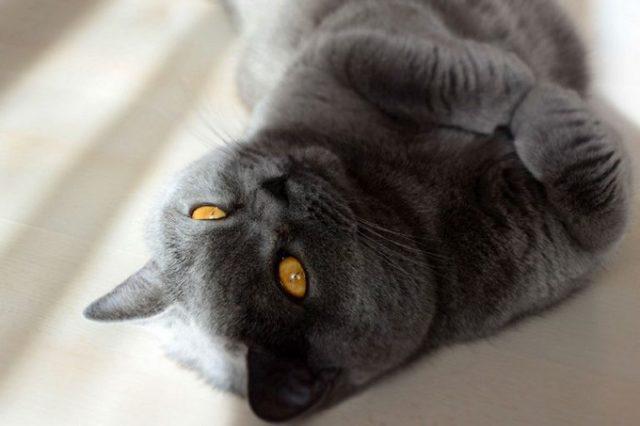 Сколько у кошек усов с каждой стороны - виды и количество