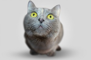 Токсикоз у кошки при беременности: как бороться и опасно ли это