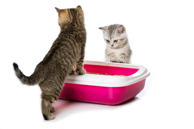 Как приучить котенка к лотку быстро с наполнителем