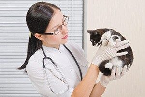 4 симптомов лямблиоза у кошек - причины и лечение