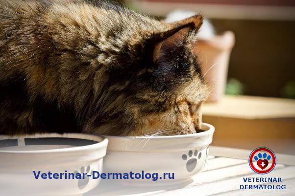 У кота на подбородке черные крупинки - причины и лечение