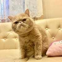 Кошка поцарапала глаз - что делать, первая помощь ребенку
