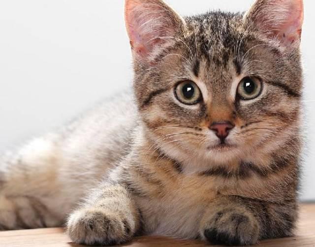 Как узнать когда родит кошка - способы определения