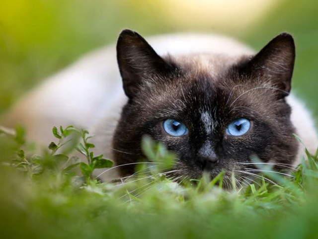 Вросший ноготь у кошки - причины, лечение, профилактика