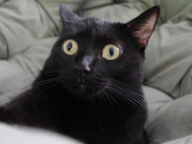 Кот смотрит в одну точку - причины и что делать