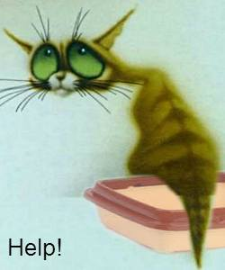 Катетеризация мочевого пузыря кота - как ставить