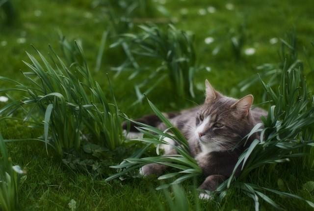 КотЭрвин для кошек - инструкция по применению, дозировка