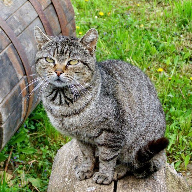 Альмагель для кошек: инструкция по применению